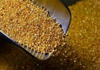 Canadiense Dynacor reanudará exportaciones de oro desde Perú