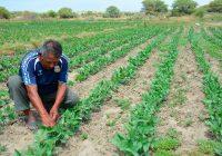 Gobierno busca proteger Mipymes vinculadas al agro, minería, pesca y acuicultura