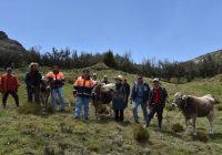 Gold Fields ejecuta proyecto que mejora la actividad ganadera en Hualgayoc